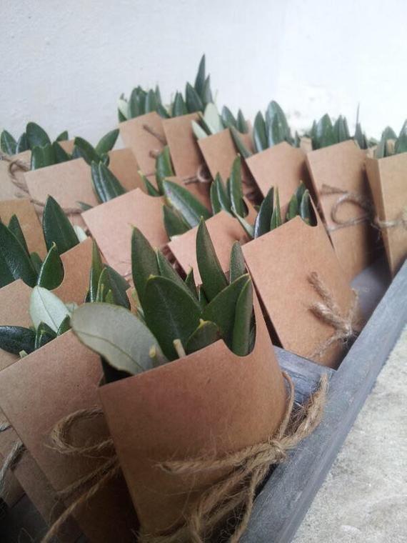 eucalyptus leaf confetti